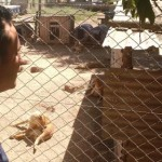 guarderia-canina