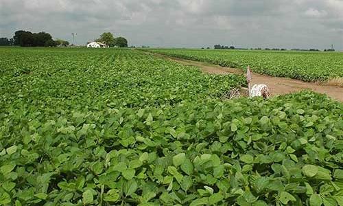 Sector agropecuario: nuevas decisiones políticas y cambio climático