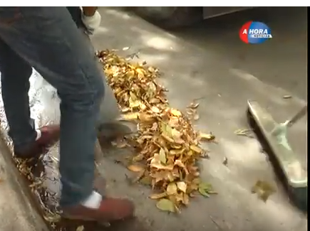 Servicios Públicos: campaña de embolsado de hojas