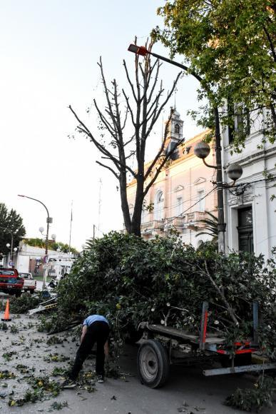 Arbolado Público: Poda de árboles de la Escuela 1