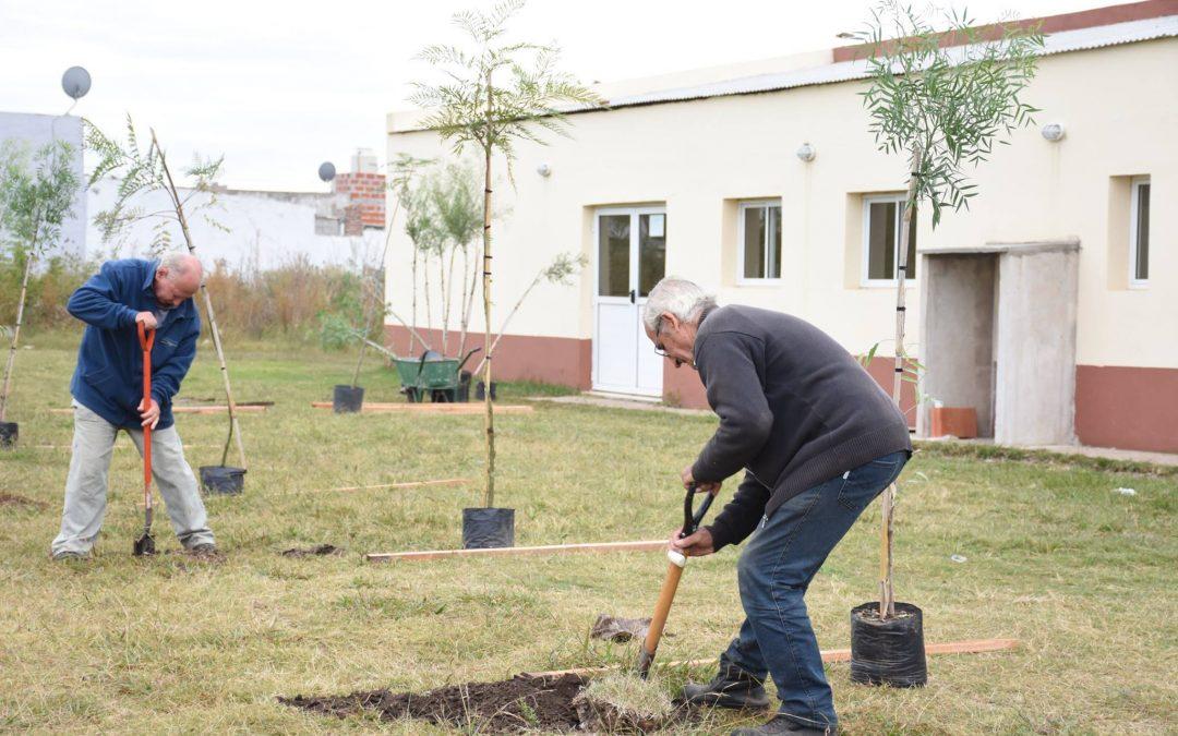 Medio Ambiente: programa Plantá tu Árbol