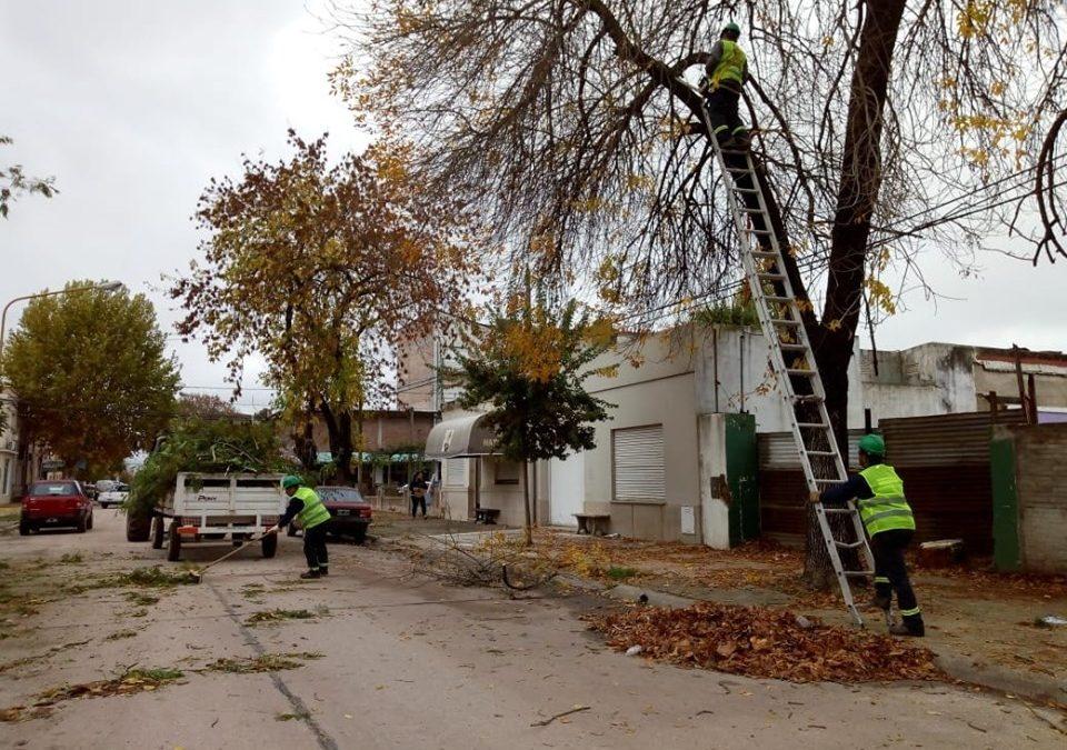 Servicios Públicos: continúa el plan de Poda Correctiva