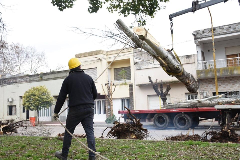 Comenzó la remodelación de la plaza Necochea