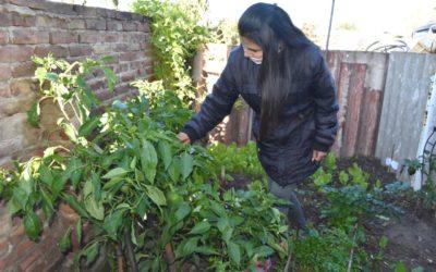 Potenciar las huertas agroecológicas familiares