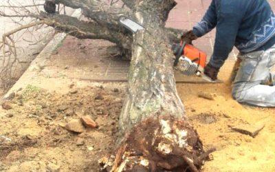 Temporada de poda y extracción de árboles