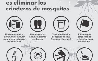 Dengue: la importancia de las medidas de prevención en el hogar