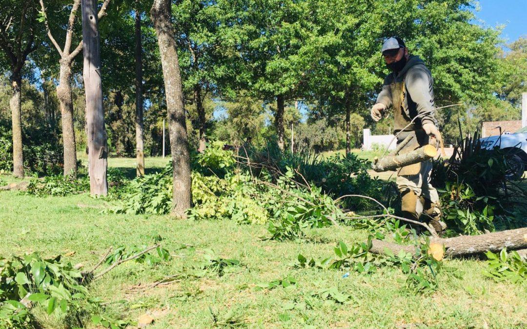 Poda correctiva en espacios verdes de la comunidad