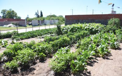 Huertas Familiares: planifican la entrega de semillas temporada otoño invierno