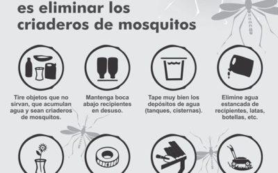 Sin mosquitos, no hay dengue