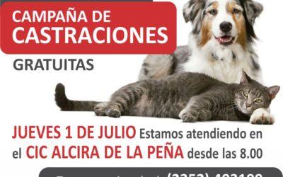 Castraciones gratuitas en el CIC Alcira de la Peña