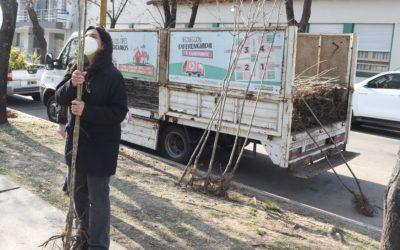 Planta tu árbol: nueva entrega de ejemplares